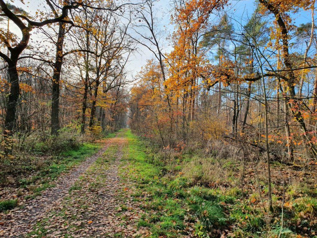 Herbstwald bei Weiterstadt