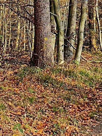 Mit dem Mountainbike im Herbstwald